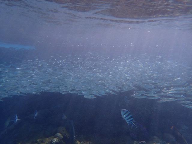 blue sea d