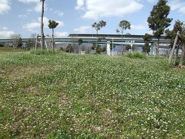 芦屋市総合公園・春を呼んでる小さな花たち