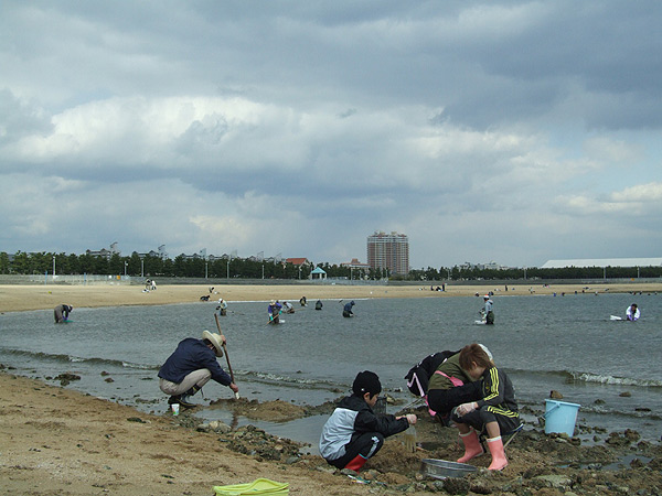 芦屋市総合公園・芦屋浜で潮干狩り