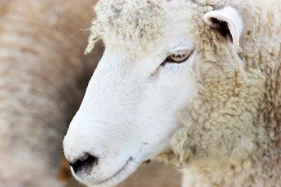 iPhone 用アプリ  「Electric Sheep」