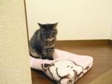 猫のミュウ