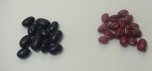 BlackTurtleBeans1