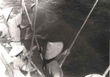 金栄丸でのカツオ漁風景