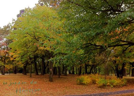blog.2012.11.12.jpg