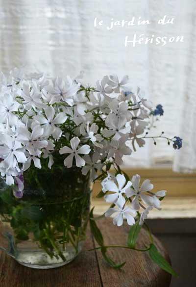 優しい草花たち.jpg