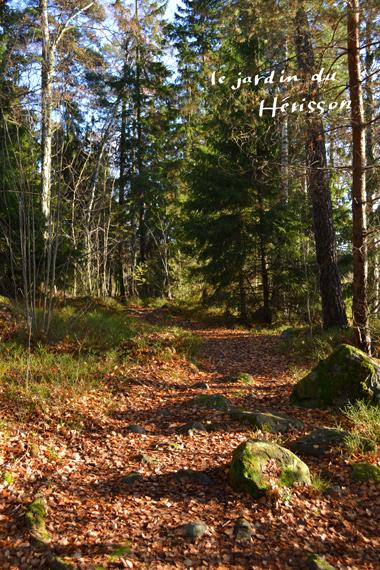 blog20141024スウェーデンの森.jpg