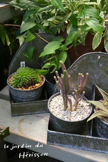 tinと多肉植物.jpg