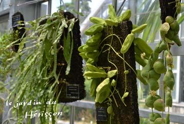 おもしろい植物1.jpg