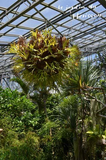 つくば植物園ハウス1.jpg