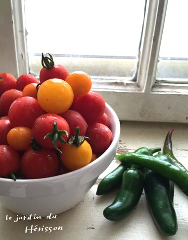 トマト 2015.jpg