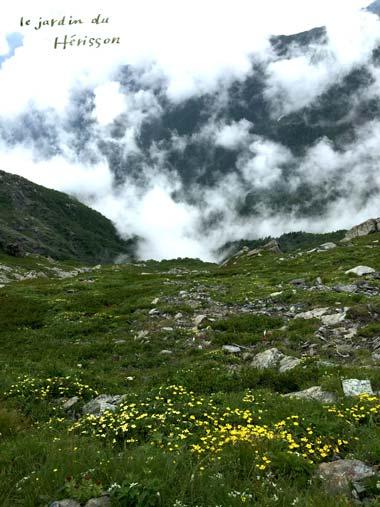 北岳 お花畑3.jpg