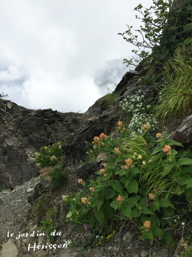 北岳お花1.jpg