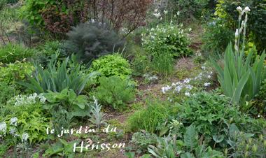 菜園20161-380.jpg