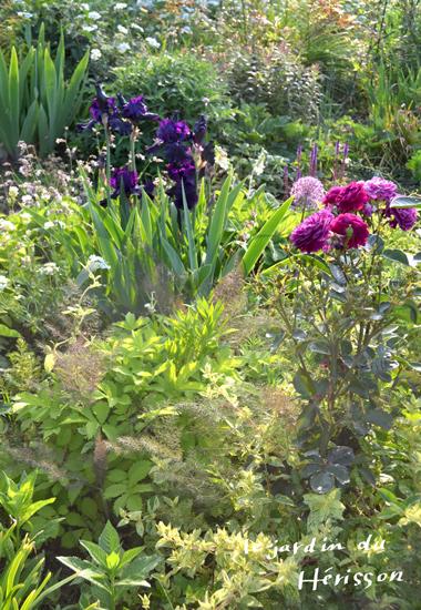 菜園たて380.jpg