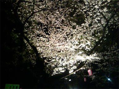 芝公園 お花見 桜