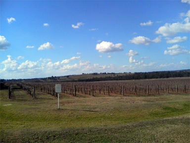 ハンターバレー ワイン畑