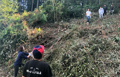 ヒノキの伐採