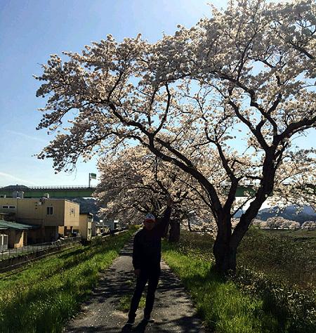 2020島根県の桜
