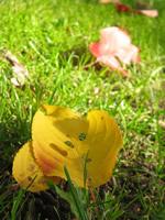 北海道はすでに紅葉真っ盛り