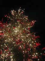 恵比寿ガーデンプレイス前のクリスマスツリー