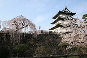 弘前城の桜満開