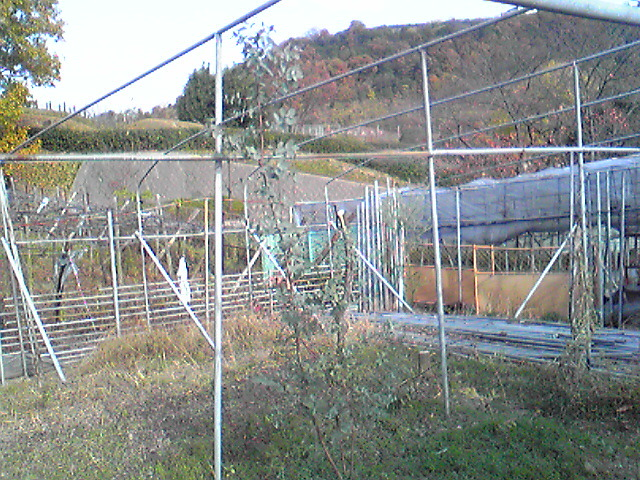 Image581.jpg