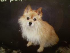 ファーミネーター:モデル犬