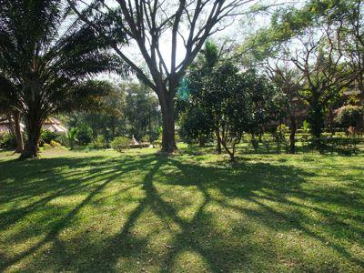 タオガーデンの庭
