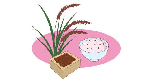 ごはんと環境:赤米(あかまい)ものがたり