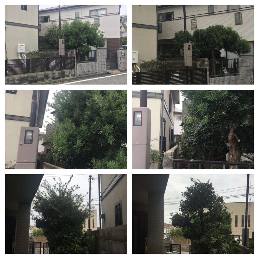 H29 1019 植木剪定