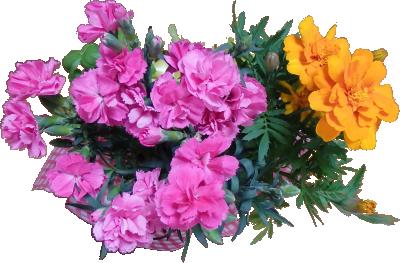 母の日の花(上から)