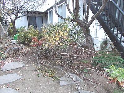 切り落とした枝