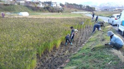 harvest01.JPG