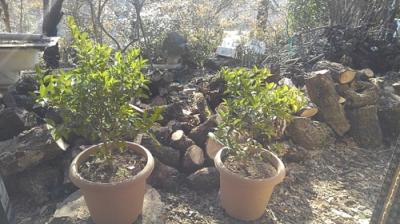 shiquasa-plants.jpg