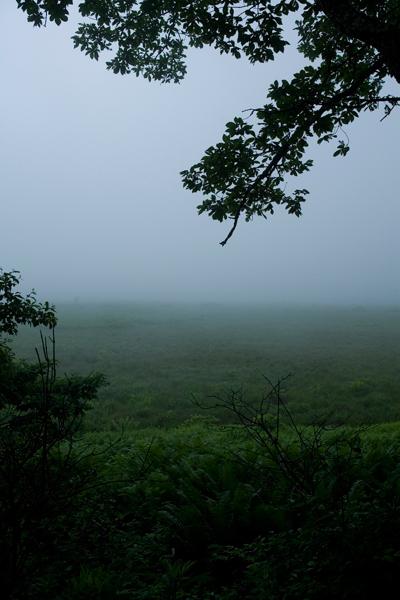 長野県,八島湿原
