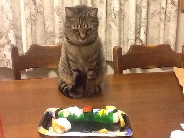 お寿司を狙う猫