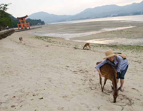 宮島の砂浜で鹿に抱きつく