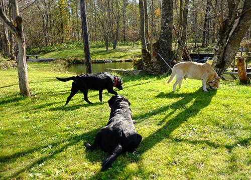 紀山の犬たち