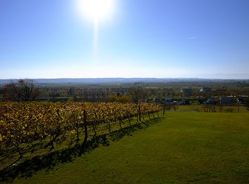 ワイン城から望む十勝平野