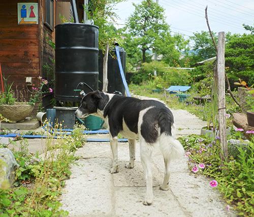 『ビラパワ』犬