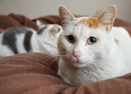 ラテの一番可愛い顔の写真。