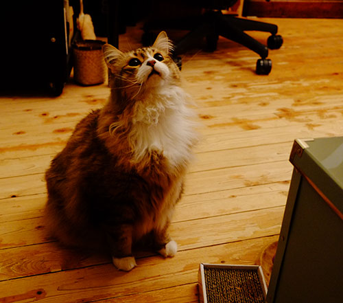 パリ友人宅の猫『ルルちゃん』1