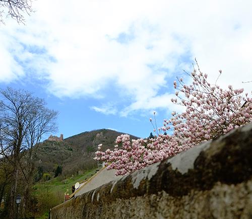 リヴォビレ/街裏の清流沿いの桜色の花