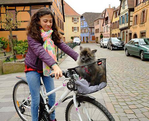 リヴォビレ/小径/犬を自転車のカゴに乗せて