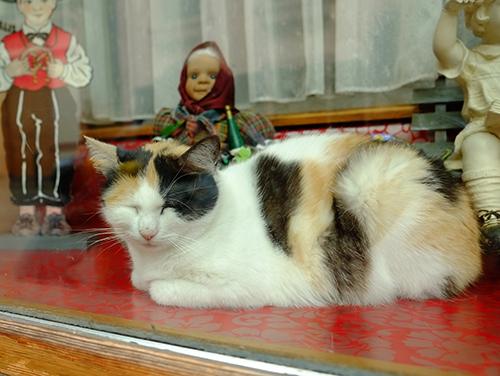 リヴォビレ/小径/ショーウィンドウの三毛猫さん1