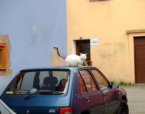 リヴォビレ/小径/車の屋根の上の白猫1