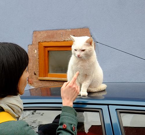 リヴォビレ/小径/車の屋根の上の白猫3