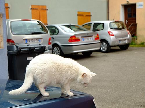 リヴォビレ/小径/車の屋根の上の白猫4