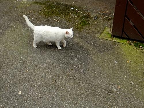 リヴォビレ/小径/車の屋根の上の白猫5