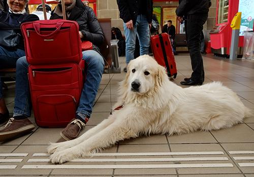 コルマール駅/待合室の犬